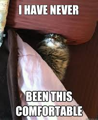 bed cat memes quickmeme