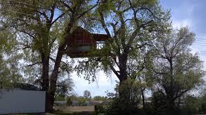 white knuckle aviation u2013 n5dar u2013 cool tree house