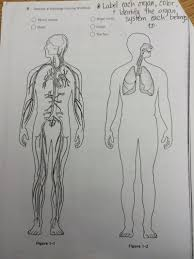 Anatomy And Physiology Coloring Workbook Chapter 6 Daily Lessons Human Anatomy U0026 Physiology With Miss Lane