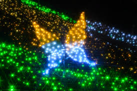 free images night butterfly christmas tree christmas