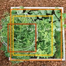garden layouts for vegetables small veggie garden ideas sunset