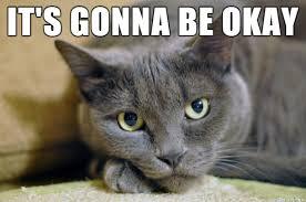 Cat Meme Maker - its ok cat meme ok best of the funny meme