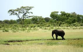 sle resume journalist position in kzn wildlife cing chiara chiara87pa
