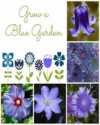 blue flowers for a garden daily appetite