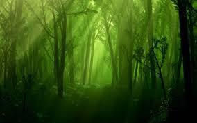 forest hd wallpaper free download hd wallpaper