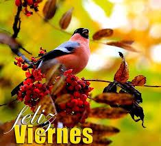 imagenes feliz viernes facebook banco de imágenes postales gratis con mensajes de feliz viernes