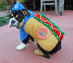 kosher dog hebrew national halloween costume cute collegehumor post