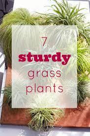 991 best gardening tips u0026 ideas images on pinterest martha