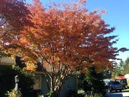 best trees to plant in pa coolman club