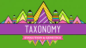 taxonomy life u0027s filing system crash course biology 19 youtube