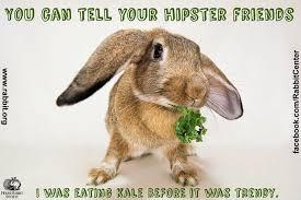 Chocolate Bunny Meme - rabbit ramblings funny bunny monday meme day
