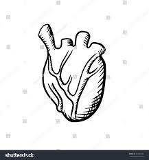 Heart Anatomy Arteries Human Heart Anatomy Icon Detailed Arteries Stock Vector 319226798