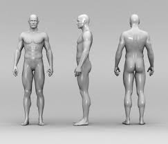 Loin Human Anatomy Useless Body Parts 6 Body Parts And Organs That Humans Do Not Need