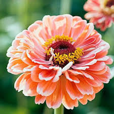12 Best Annual Flowers For by Best 25 Best Flowers Ideas On Pinterest Shade Plants Planting