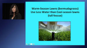 how to save water and beautify your landscape the sustainable
