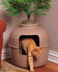 black friday litter boxes amazon 76 best jessy images on pinterest animals cats and adorable animals