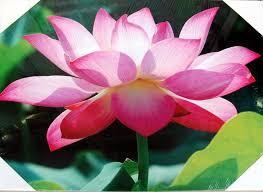 imagenes flores relajantes cuadros de flores y de obreros en rascacielos blog de latiendawapa