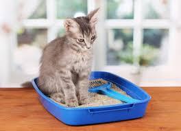 9 best cat litter box number 6 is beautiful cat overdose