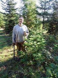 corner crest natural farm christmas tree season 2015