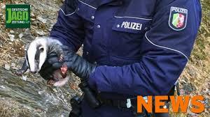 Polizei Bad Camberg Polizei Rettet Süßes Dachsbaby Alarm Um Riesige Blutspur