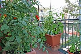 Vegetable Gardening In Pots by How To Make An Urban Vegetable Garden City Vegetable Garden