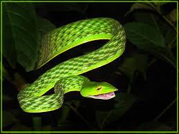 a green snake wallpapers green snake steve u0027s digicams forums