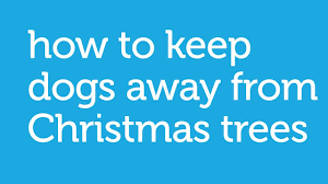 how to keep your dog away from the christmas tree by petco youtube