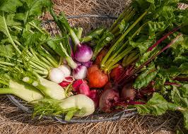 Summer Gardening - summer garden vegetables gardening ideas