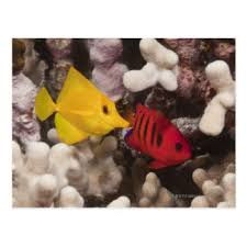 yellow tang gifts on zazzle