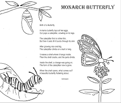 monarch butterfly worksheets worksheets