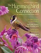 hummingbird flowers hummingbird flowers the best 18 plant families for nectar