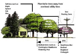 we provide the following tree trimming tree removals hazardous