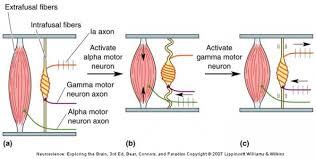 Motor Reflex Arc Hd Wallpapers Diagram Of Reflex Arc Hja Earecom Press