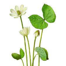 Plants Of Season 4 Joanna by Veggie Garden Goals The Impatient Gardener