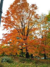 161 best autumn in new york images on pinterest central park
