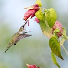 bird friendly native plants audubon how do birds taste their food audubon