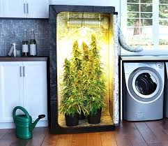 building a grow cabinet 47 best weed images on pinterest plants weed and cannabis edibles