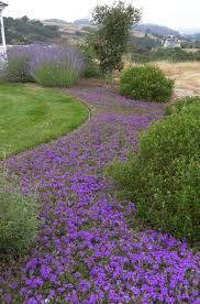 Backyard Ground Cover Options 99 Best Groundcovers Images On Pinterest Flower Gardening