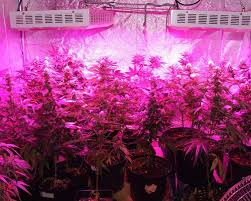 best led grow lights for marijuana the best marijuana grow lights