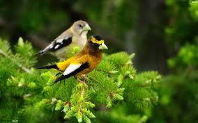 birds on a tree hd wallpaper