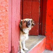 how to get dog to stop barking how do you approach a neighbor about their dog u0027s barking