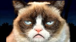 Cat Happy Birthday Meme - grumpy cat happy birthday song youtube