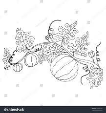 cartoon black white watermelon foliage flowers stock illustration
