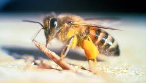 honey bee decorations for your home how to get rid of bees u2013 diy solutions to bee proof your home