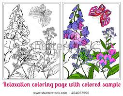 Flowers For Birds And Butterflies - decorative flowers birds butterflies coloring book stock vector