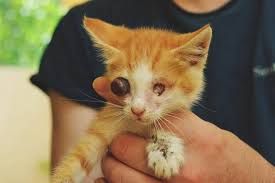 Dogs For The Blind Adoption Blind Cats Can They Have A Normal Life Theorphanpet