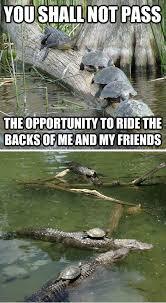 Alligator Meme - gandalf alligator