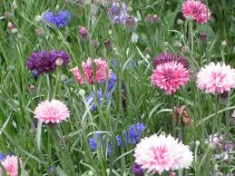 cottage garden flowers liberty for everyone elegance on a shoestring