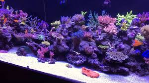home sps reef tank 20 03 2016 youtube