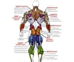 Google Body Anatomy 29 Best 근육 Images On Pinterest Anatomy Anatomy Reference And